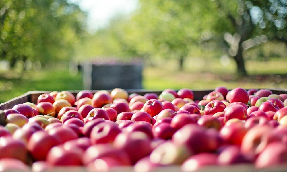 Fruit Harvesting Equipment